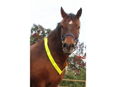 Pferde-Halsband/Patrouliengurt