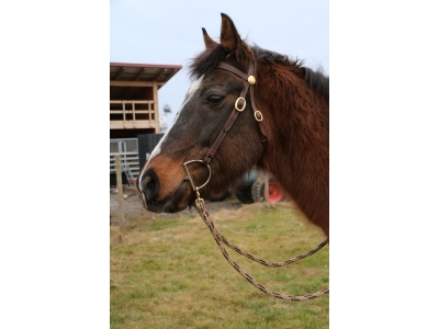 Horsemanship Zaum braun mit brauner Naht