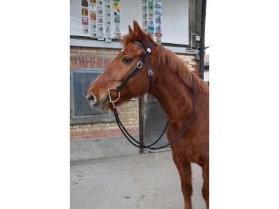 Horsemanship Zaum schwarz mit schwarze..