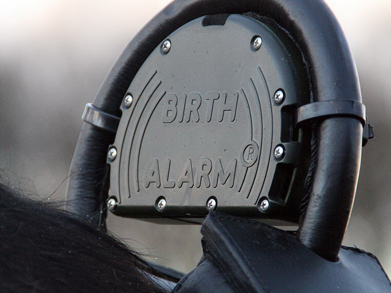 Birth Alarm / Stallkamera
