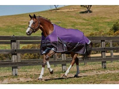 Weatherbeeta Comfitec Plus Dynamic standard neck lite purple/black